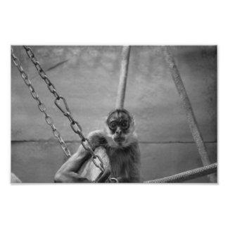 Macaco da prisão impressão de foto