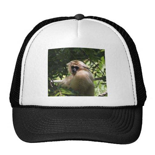 Macaco do Gibbon Bonés