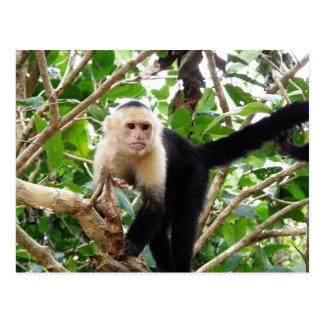Macaco em Costa Rica Cartão Postal