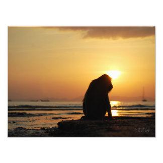 Macaco pensativo //Krabi, Tailândia Impressão De Foto