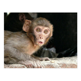 Macaco Scared com o cartão grande dos olhos
