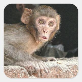 Macaco Scared com olhos grandes Adesivo Quadrado