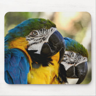 Macaw azul & amarelo da série animal de Mousepad -