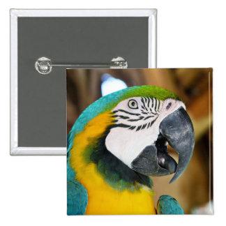 Macaw Bóton Quadrado 5.08cm