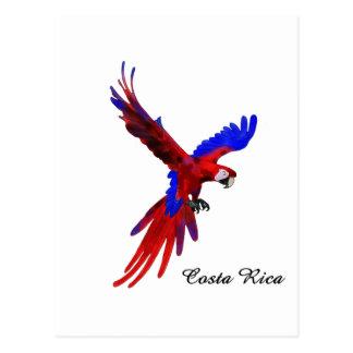 Macaw do vermelho de Costa Rica Cartoes Postais