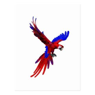Macaw do vermelho de Costa Rica Cartões Postais