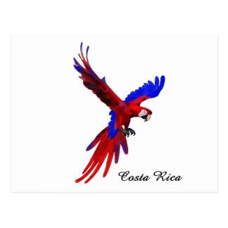 Macaw do vermelho de Costa Rica Cartão Postal