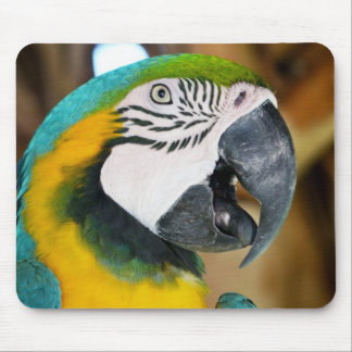 Macaw Mouse Pads