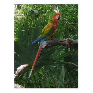 Macaw no cartão de México