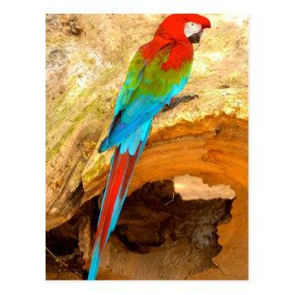 Macaw vermelho e verde, cartão de Trinidad