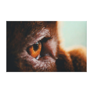 Macro francês do olho do Mastiff das canvas 30x30