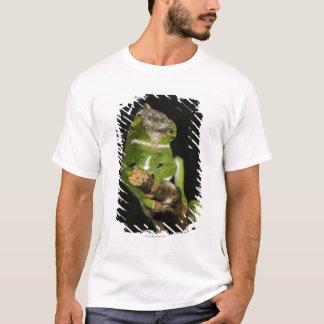 Madagascar Camisetas