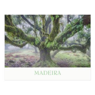 Madeira - cartão da árvore do louro com texto