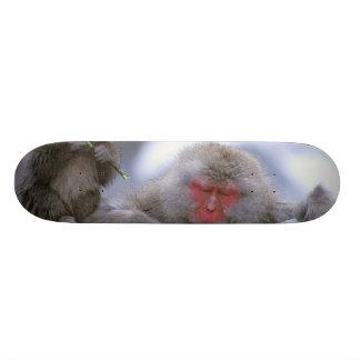 Mãe do macaco da neve & criança, Jigokudani, Nagan Skates