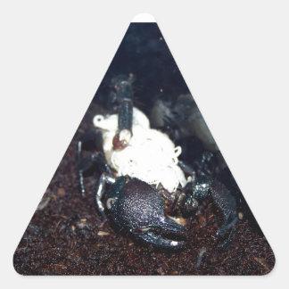 Mãe e crianças do escorpião adesivo triangular