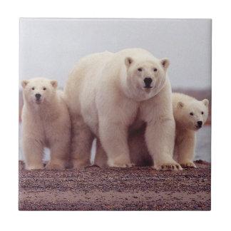 Mãe e Cubs do urso polar