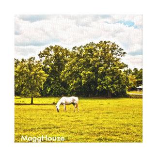 MaggHouze que pasta o cavalo