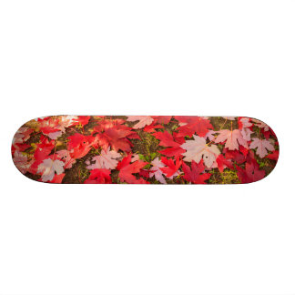 mágica cromática dos skates do outono