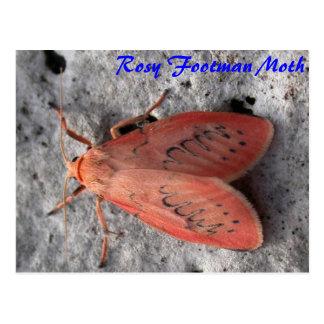 Mágica da traça: Cartão rosado da traça do Footman Cartão Postal
