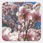 Magnólia cor-de-rosa de florescência (Tulpenbaum) Adesivo Quadrado