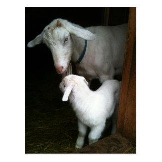Mamã com o cartão da cabra do bebê