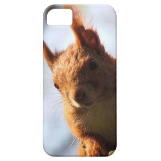 Mamífero do roedor do esquilo capa barely there para iPhone 5