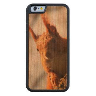 Mamífero do roedor do esquilo capa de cerejeira bumper para iPhone 6