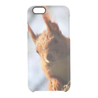 Mamífero do roedor do esquilo capa para iPhone 6/6S clear