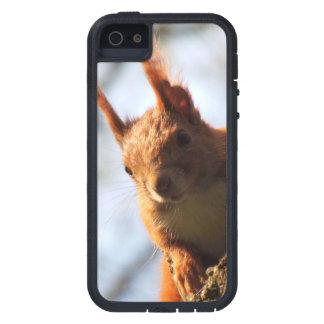 Mamífero do roedor do esquilo capas para iPhone 5