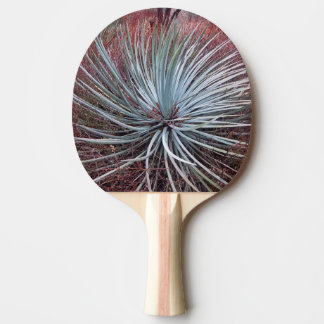 Mandioca no deserto raquete para ping pong