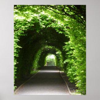 Mandril protegido do jardim botânico pôster