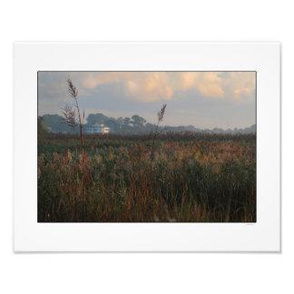 Manhã do pântano na foto da baía de Winyah Impressão De Foto