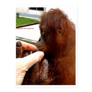 Manicure do orangotango cartão postal