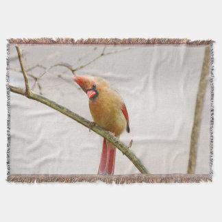 Manta Cobertura cardinal fêmea curiosa do lance