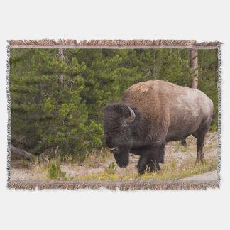 Manta Cobertura selvagem do lance do búfalo ou do