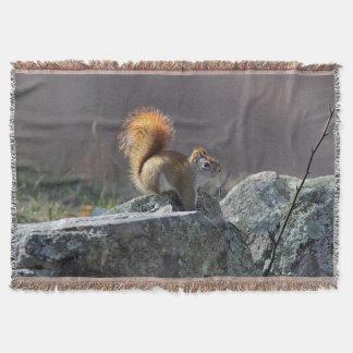 Manta Esquilo vermelho em uma parede de pedra