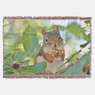 Manta Esquilo vermelho na árvore de mulberry