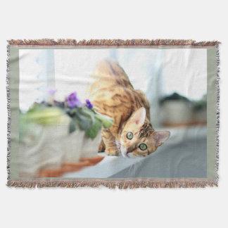 Manta Gato repicando curioso Photograpy