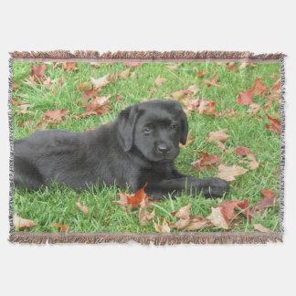 Manta Labrador preto - alegria do outono