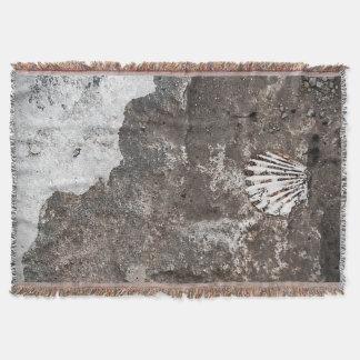 Manta Lance fóssil de Shell de Scallop