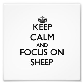 Mantenha a calma e o foco em carneiros fotos