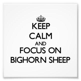 Mantenha a calma e o foco em carneiros de Bighorn Fotografia
