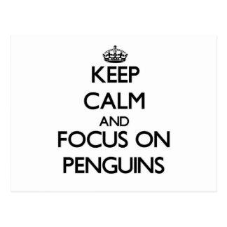 Mantenha a calma e o foco em pinguins cartões postais