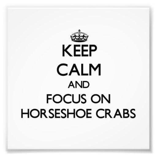 Mantenha a calma e o foco nos caranguejos em ferra arte de fotos