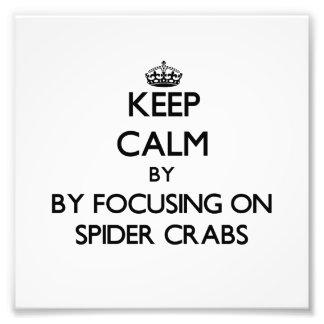 Mantenha a calma focalizando em caranguejos de ara