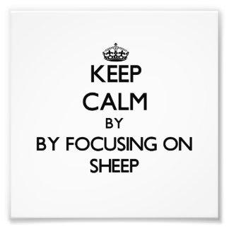 Mantenha a calma focalizando em carneiros fotografias