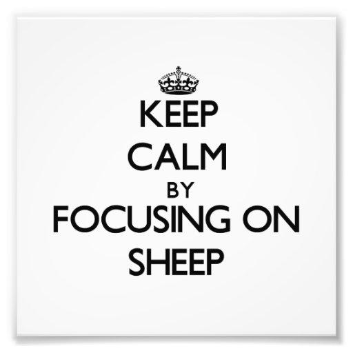 Mantenha a calma focalizando em carneiros impressão de fotos