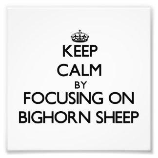 Mantenha a calma focalizando em carneiros de Bigho Arte De Fotos