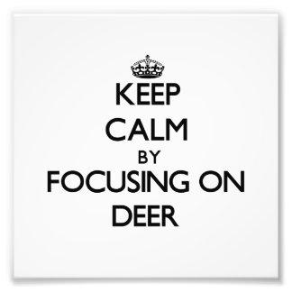 Mantenha a calma focalizando em cervos foto arte
