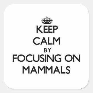 Mantenha a calma focalizando em mamíferos